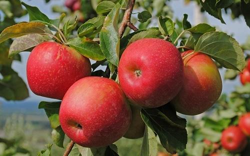 cách làm trắng da mặt bằng nước ép táo