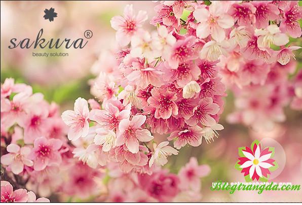 mỹ phẩm Sakura Nhật Bản